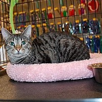 Adopt A Pet :: Sally - Alpharetta, GA