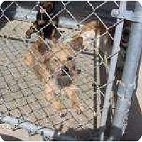 Adopt A Pet :: Cooper - Acton, CA