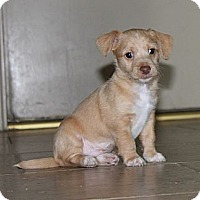 Adopt A Pet :: Necho - Scottsdale, AZ