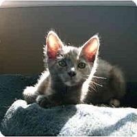 Adopt A Pet :: Callistra (Callie) - Irvine, CA