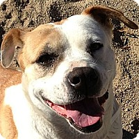 Adopt A Pet :: Mabel - LOVABLE GIRL - Seattle, WA