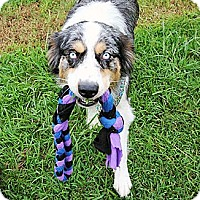 Adopt A Pet :: Louise - PENDING - Savannah, GA