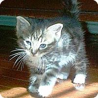 Adopt A Pet :: Darky, Boots & Crier - Island Park, NY