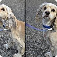 Adopt A Pet :: Eddie - San Diego, CA