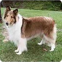 Adopt A Pet :: Razzle - Gardena, CA