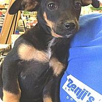 Adopt A Pet :: Tadpole - Phoenix, AZ