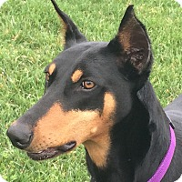 Adopt A Pet :: Mishka - Arlington, VA