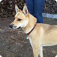 Adopt A Pet :: Ari (foster in Massachusetts!) - Cranston, RI