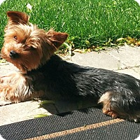 Adopt A Pet :: Kirby-adoption pending - Mississauga, ON