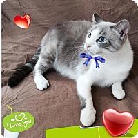 Adopt A Pet :: Vinson - Harrisburg, NC