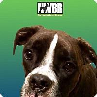 Adopt A Pet :: Mimi - Woodinville, WA