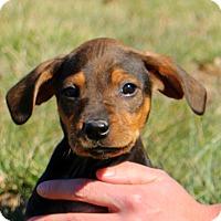 Adopt A Pet :: Binky - Glastonbury, CT