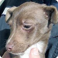 Adopt A Pet :: Logan - Germantown, MD