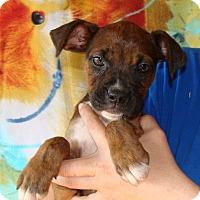 Adopt A Pet :: Sunflower - Oviedo, FL