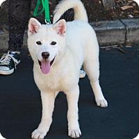 Adopt A Pet :: Vinnie - Corona, CA