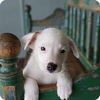 Adopt A Pet :: Goyle - San Antonio, TX