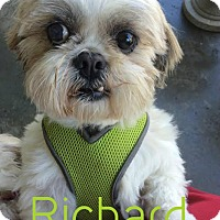 Adopt A Pet :: Richard - House Springs, MO