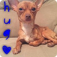 Adopt A Pet :: Hugo - Garden City, MI