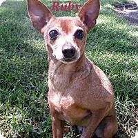 Adopt A Pet :: Ruby - El Cajon, CA