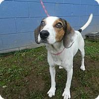 Adopt A Pet :: Zelda - Randleman, NC
