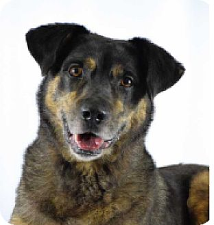 Husky Mix Dog for adoption in Denham Springs, Louisiana - Kilo