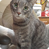 Adopt A Pet :: Gibby - Richboro, PA