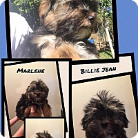 Adopt A Pet :: Billie Jean - Scottsdale, AZ