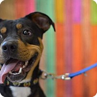 Adopt A Pet :: Cinder - South Amana, IA