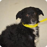 Adopt A Pet :: Peppy - Harrisburg, PA
