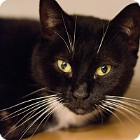 Adopt A Pet :: Camry - Grayslake, IL