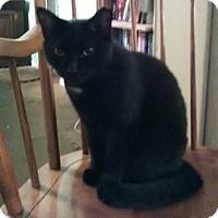 Adopt A Pet :: DashCP - Carlisle, PA