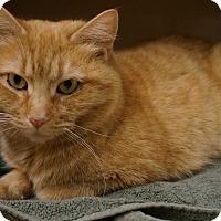 Adopt A Pet :: Fiona - Salem, NH