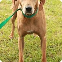 Adopt A Pet :: Misha - Norfolk, VA