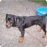 Adopt A Pet :: Magnum - Cuddebackville, NY