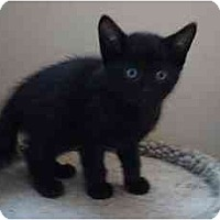 Adopt A Pet :: Kittens - Hamilton, ON