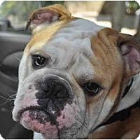 Adopt A Pet :: Tank - Winder, GA