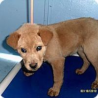 Adopt A Pet :: Tabitha - Dundas, VA
