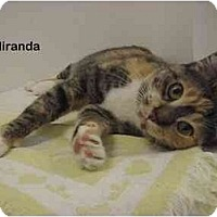 Adopt A Pet :: Miranda - Portland, OR