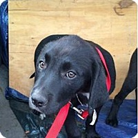 Adopt A Pet :: India - Oak Brook, IL