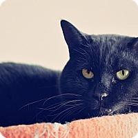 Adopt A Pet :: Dexter - Markham, ON
