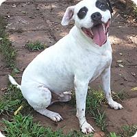 Adopt A Pet :: Rocket - Staunton, VA
