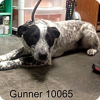 Adopt A Pet :: Gunner - baltimore, MD