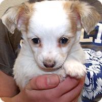 Adopt A Pet :: THREE AMIGOS TRES - Corona, CA