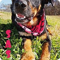 Adopt A Pet :: Sasha - Converse, TX