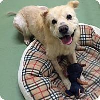 Adopt A Pet :: Maggie - Gainesville, FL