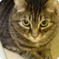 Adopt A Pet :: Henry (DH) - Orlando, FL