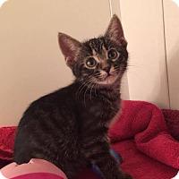 Adopt A Pet :: Camaro - Gainesville, FL