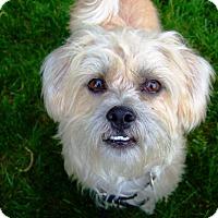Adopt A Pet :: Baby Boi AKA Benny - Kara - Kalamazoo, MI