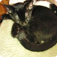 Adopt A Pet :: Bagheera - McHenry, IL