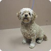 Adopt A Pet :: DEXTER - Reno, NV